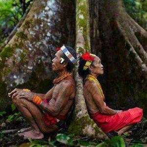 Lo que la gente de la ciudad no entiende es que las raíces de todos los seres vivos están entrelazadas. Cuando un árbol majestuoso es derribado, cae una estrella del cielo  Chan Kin Vejo   Lacadon