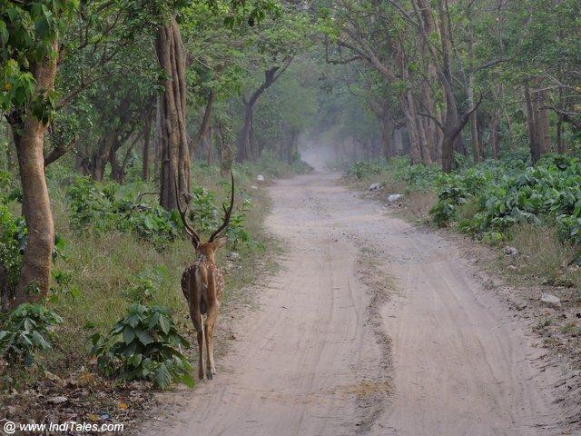 राजाजी राष्ट्रीय उद्यान - उत्तराखण्ड
