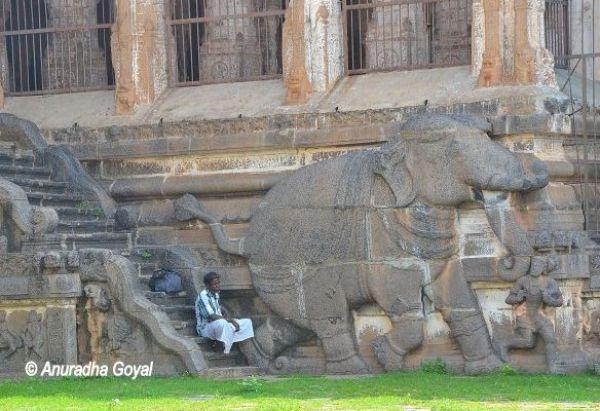 नटराज मंदिर पर उत्कीर्णित हाथी
