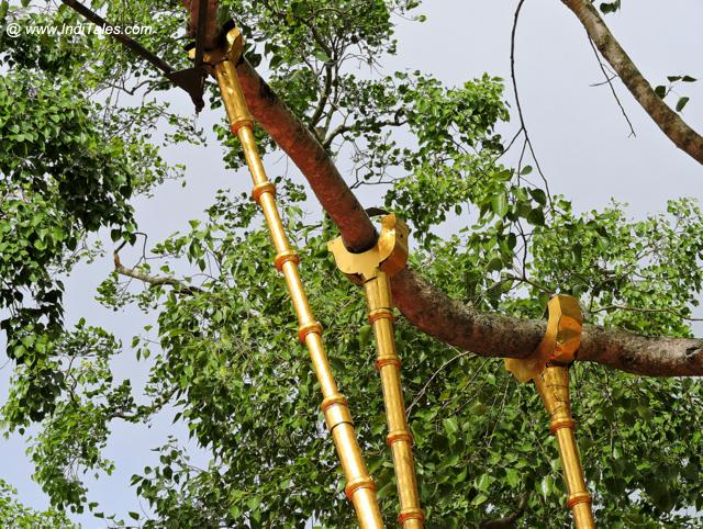 श्री महाबोधि वृक्ष का वो हिस्सा जो बोध गया से आया था - अनुराधापुरा