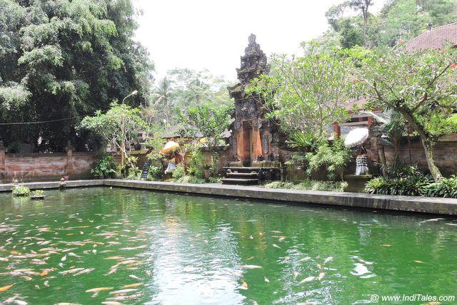 मत्स्य कुंड - पुरा तीर्थ एम्पुल - इंडोनेशिया के जल मंदिर