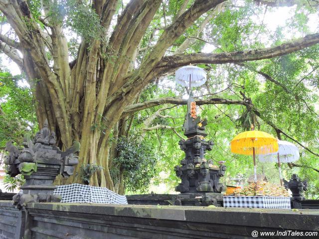 तीर्थ एम्पुल जल मंदिर में भव्य पेड़ के नीचे मंदिर