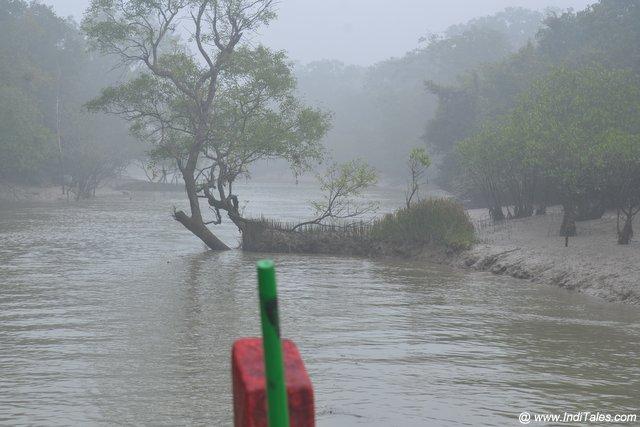 अप्रवाही जल पर नौका विहार - भितरकनिका राष्ट्रीय उद्यान