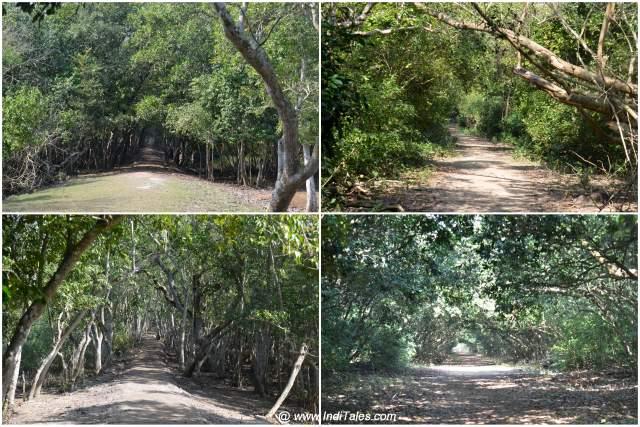 भितरकनिका राष्ट्रीय उद्यान के जंगल