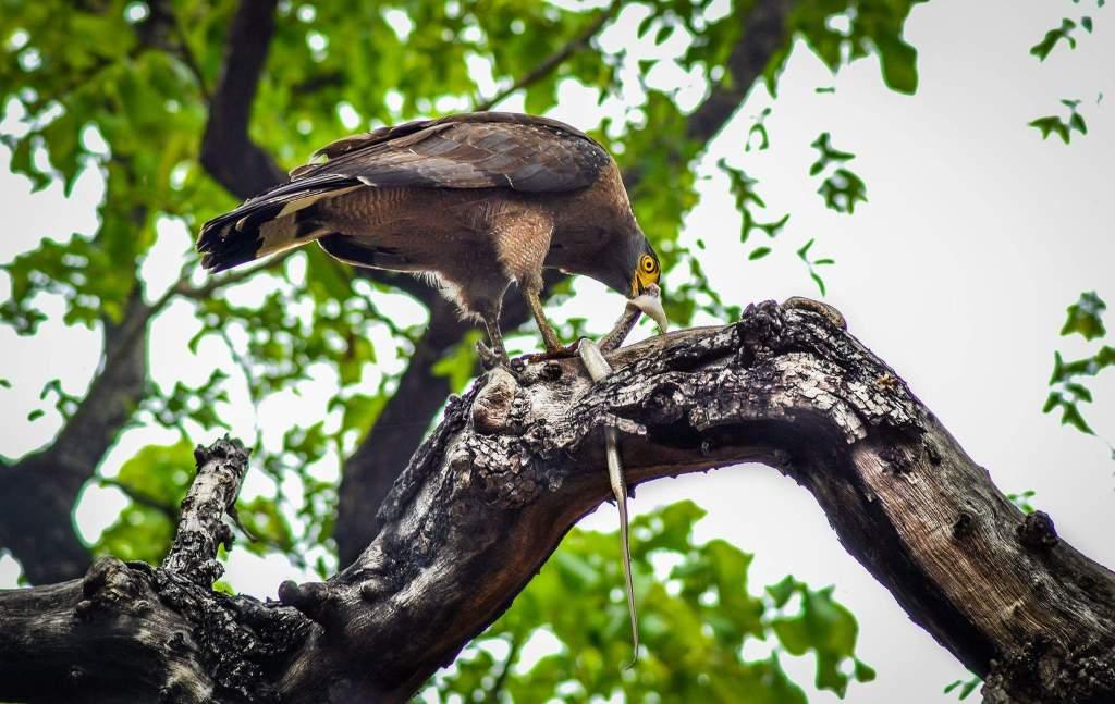 Mahaveer Wildlife Sanctuary Goa