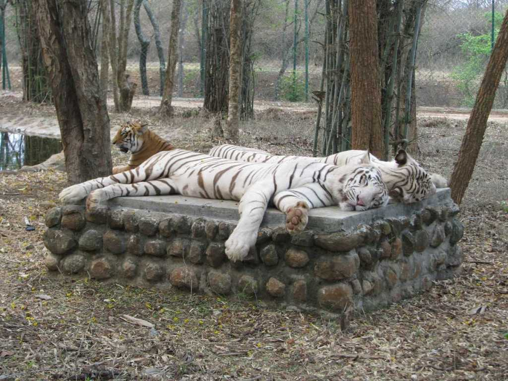 Bannerghatta National Park Bangalore Karnataka
