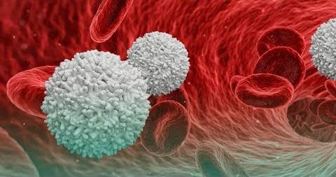 WBC (White Blood Cells)   Health Tips   Indocare Diagnostics Blog   Pune