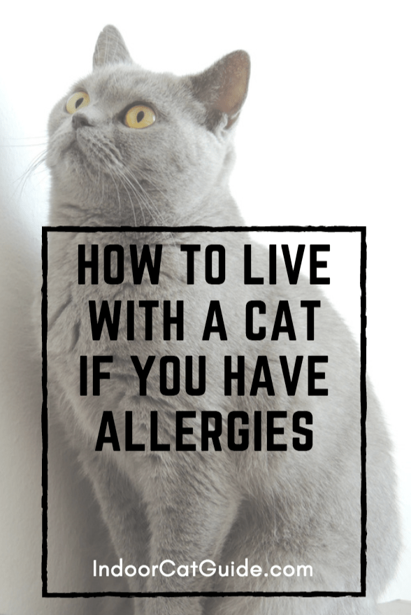 How to live with a cat if you have allergies