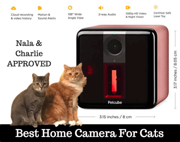 best home camera for pets