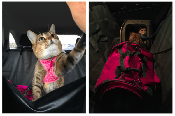 jetblue cat policy