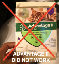 Best Flea Treatment for Cats with Sensitive Skin?