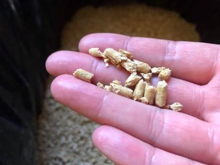 best biodegradable cat litter