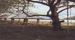 Wisata Pantai Tope Jawa.