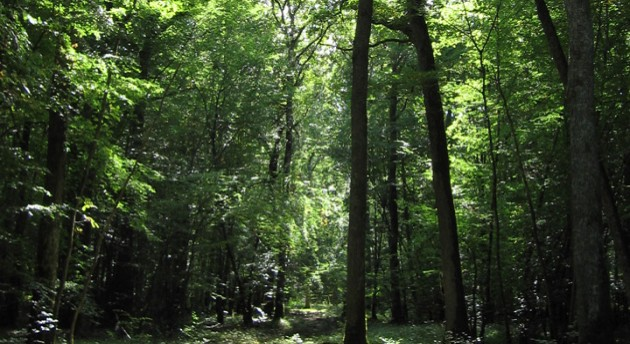 Image result for chateauroux forest
