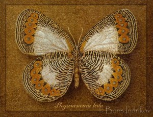 physcaeneura leda