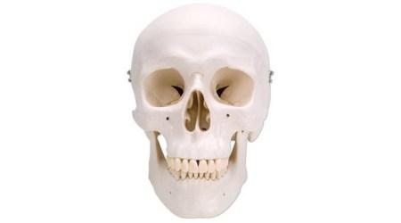 Classic Human Skull. 3 Parts