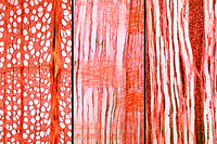 Fagus, three sections of wood: t.s., r.l.s., t.l.s.