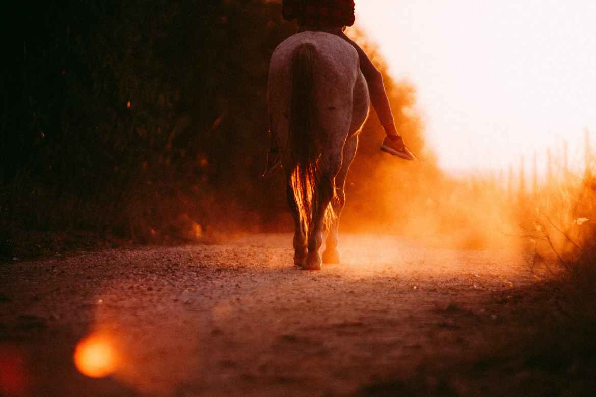 person riding horses during sunset