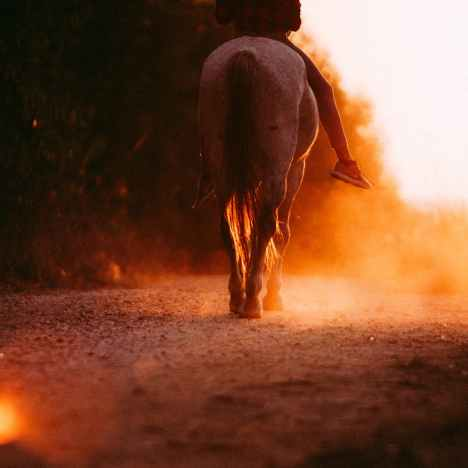 Training a Young Horse is Hard! Why Lowering Your Expectations is Actually a Good Thing.