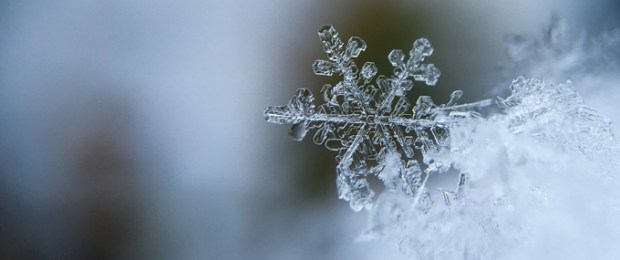 Preparing Your Plant for Cold Weather