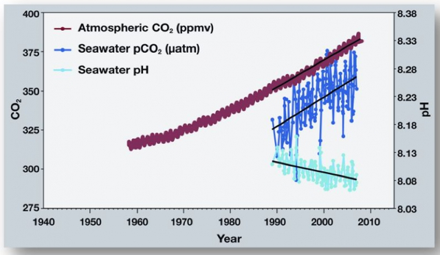 640_noaa_co2_in_atmosphere_seawater_and_ocean_ph.jpg original image ( 797x464)