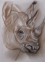 Namibian Rhino, Charcoal on paper