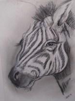 zebra, charcoal on paper, SOLDzebra, charcoal on paper