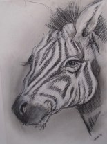 zebra, charcoal on paper, SOLDzebra, charcoal on paper