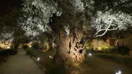 Bazylika Narodów w Getsemani maj 2014
