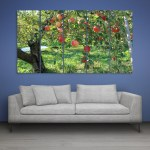 Multiple Frames Apple Tree Wall Painting for Living Room