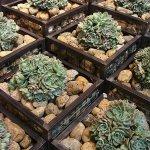 Garden Syle con Gabbioni Metallici per Arredo Giardino Inerteco