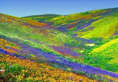 Experience heaven on earth at Valley of Flowers this monsoon