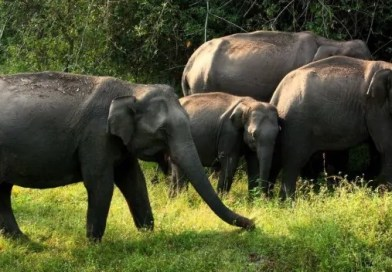 Bandipur National Park of Mysore is for all nature lovers