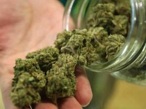 weed-300x224