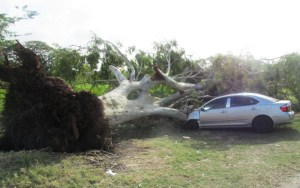 The damaged car in the Botanical Gardens. [iNews' Photo]