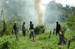 FLASHBACK: Members of the Joint Services destroy marijuana fields at Hauraruni Creek in the Demerara River.