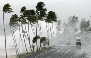 palm-trees-motorway_800788i