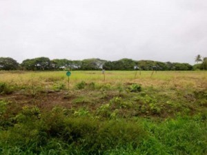 The land at Lusignan, ECD. [Kaieteur News' Photo]