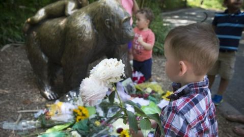 A 17-year-old gorilla was shot dead to protect a boy who fell into the animal's pen (John Minchillo/AP)
