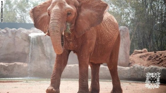 Elephants at Rabat zoo are kept behind a wooden enclosure and ditch (CNN photo)