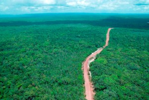 guyana-forest