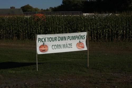 PumpkinPicking (1 of 19)