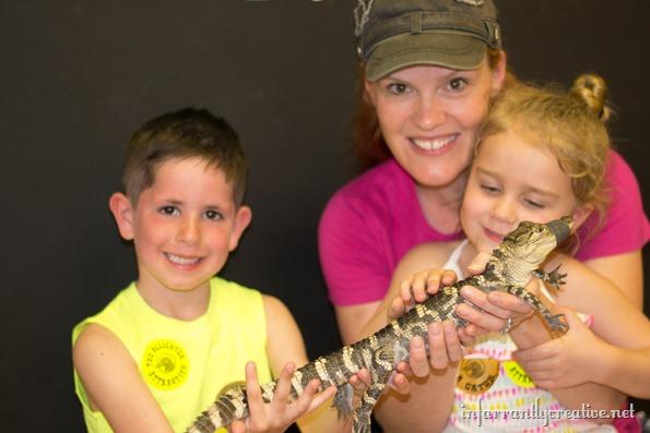 the-alligator-attraction