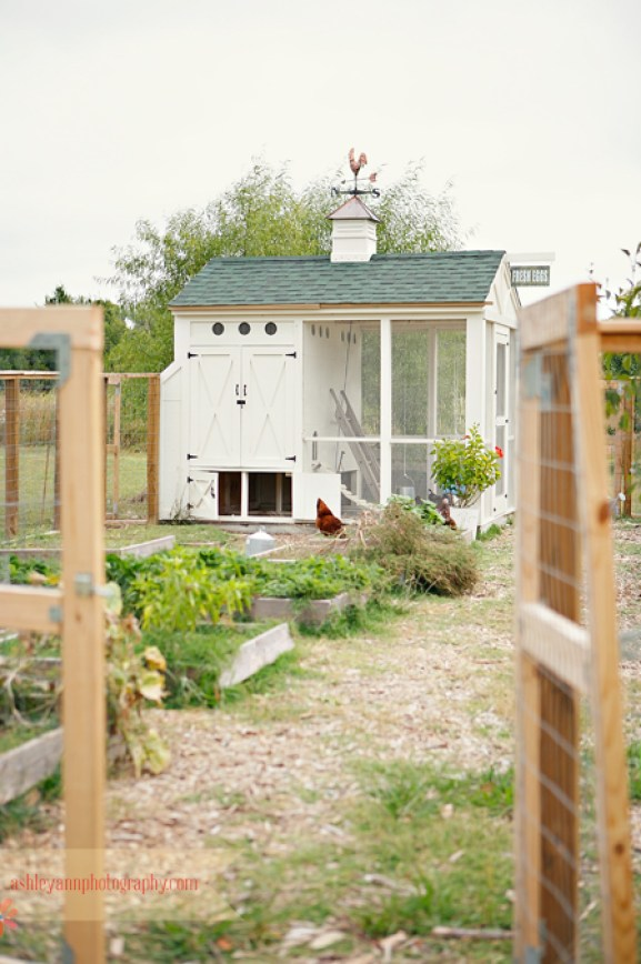 garden-chicken-coop
