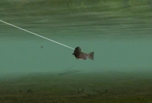 reel-fishing