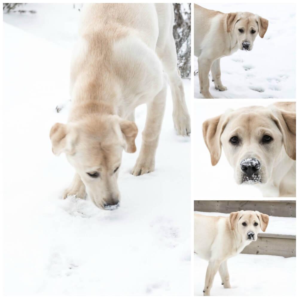 Luna Lovedog's puppy treats | www.infinebalance.com
