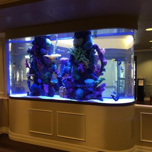 1200 Gallon Race Track With Faux Reef Aquarium Maintenance Las Vegas Infinity Aquarium