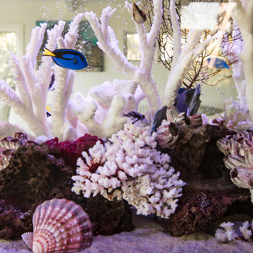 Types Of Aquariums Features And Benefits Infinity