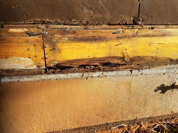 Mold and Rot (2)