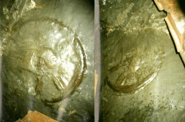 300 Million Year Old Wheel